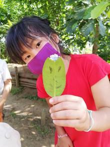 植物アート♪タラヨウの葉